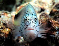 Морские обитатели Красного моря