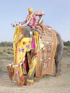 Elephant Festival Jaipur, Rajasthan