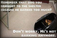 View Poster - From an Animal Shelter Director - Latigo