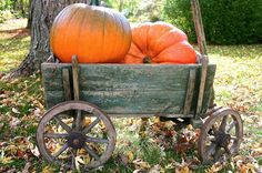 This antique goat cart with original green paint just begs for pumpkins but would also look great filled with mums or straw and a scarecrow.