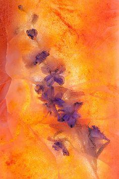 Summer Heat Print by Zina Zinchik