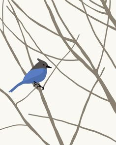 Stellers Jay waiting for spring.