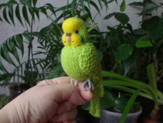 Knitted budgie Apple,rehomed on ebay.