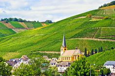 The German Riesling wines from the Mosel Valley are my favorite white wines and I would love the opportunity to for a closer inspection of the grape fields.
