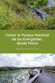 ¿Visitar los Everglades desde Miami por vuestra cuenta? Os contamos nuestra experiencia visitando este Parque Nacional y os damos algunos consejos. Universal Studios, Desktop Screenshot, Miami, Florida, Animal Close Up, Trekking, National Parks, Paths, Tips