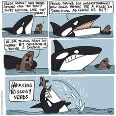 Orcas, Mammals, Humor, Art, Drawings, Art Background, Killer Whales, Humour, Kunst