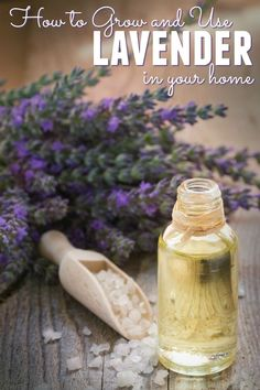 Do you have an abundance of lavender growing in your garden? Then you need to read how to grow and use lavender in your home - we have some great ideas!