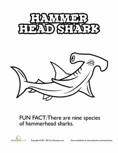 hungry hammerhead shark ocean coloring pageshammerhead