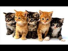 С. Михалков.  Стихи для детей.  Котята