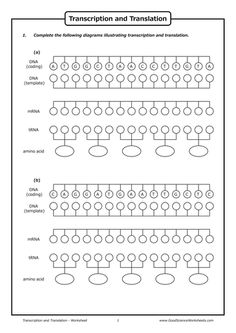 transcription and translation practice worksheet 1 teaching genetics pinterest worksheets. Black Bedroom Furniture Sets. Home Design Ideas