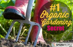 An Introduction to Companion Planting | via @SparkPeople #spring #garden