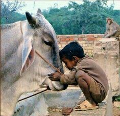 The love and respect towards cow. Yes, we Indians are proud of it that we not only love cats and dogs but all other creatures. The love and respect towards cow. Yes, we Indians are proud of it that we not only love cats and dogs but all other creatures. Animals For Kids, Animals And Pets, Cute Animals, Baby Animals, Image Emotion, Beautiful Creatures, Animals Beautiful, Tier Fotos, Mundo Animal