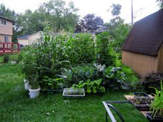 Starting a City Garden - Homestead Chronicles