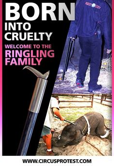 """BOYCOTT THE CIRCUS!!! Or at least show your children just how the cruel """"trainers"""" make elephants preform."""