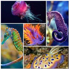 Sea creatures collage 5