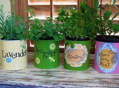 5 Top Best Indoor Herb Garden