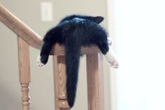 Cats can nap anywhere.