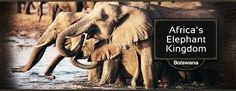 Botswana East Africa, Natural World, Travel Style, Vacations, Safari, Destinations, Elephant, Southern, Holidays