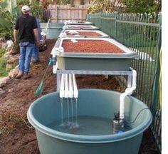 Aquaponics backyard