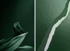 Inspiration + Paper = Pantone Color of the Year: Greenery Color Of The Year, Pantone Color, Greenery, Plant Leaves, Abstract, Paper, Artwork, Photography, Beautiful