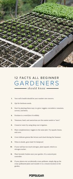 Gardening Tips For Beginners | POPSUGAR Food