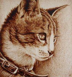 """""""Sunshine,"""" Kitten Pyrography by Cara Jordan"""