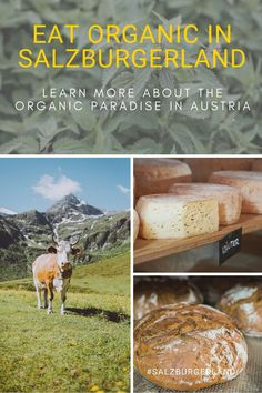 Holiday & organic: Experience the harmonious everyday life on an organic farm with passionated farmers and enjoy food with fresh ingredients. #eatorganic #holiday #purenature #salzburgerland #austria #visitaustria Sustainable Farming, Organic Farming, Z Burger, Visit Austria, Eating Organic, Farmers, Pure Products, Fresh, Learning