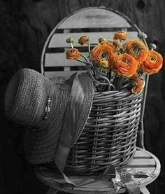 Splash of Orange Black And White Colour, Black And White Pictures, Orange Color, Color Pop, Splash Photography, Color Photography, Love Flowers, Beautiful Flowers, Color Splash Photo