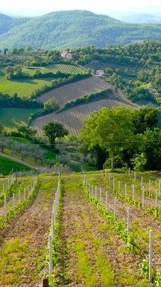 Central Italy's wine country