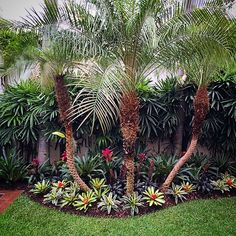 Front Yard Garden Design 20 Beautiful Flower Garden Design Ideas In Front Yard Tropical Garden Design, Tropical Backyard, Flower Garden Design, Tropical Gardens, Large Backyard, Tropical Plants, Florida Landscaping, Tropical Landscaping, Front Yard Landscaping