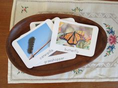 Insects- Montessori Toddler Picture & Word Cards- Large Set of Insect Cards via Etsy. Theme ideas for picture cards