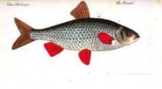 Animal - Fish - (2)