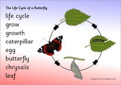 Life cycle of a butterfly word mat (SB9454) - SparkleBox