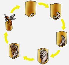 krabbelwiese: Honigbiene Kindergarten Portfolio, Material Didático, Addition Games, Bee Cards, Crochet Square Patterns, Kindergarten Crafts, Classroom Behavior, Preschool Printables, Learning Games
