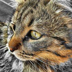 Ke bel miao!
