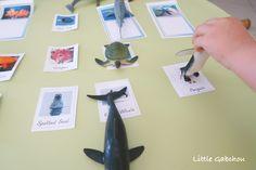 #montessori jeu d'association avec des #cartes de nomenclature #animaux de la mer a imprimer gratuitement