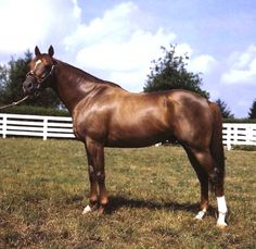 WHIRLAWAY - Won the Triple Crown in 1941. Horse of the Year in 1941 and 1942, he had 60 starts for 32 wins and 24 placings, and entered the Racing Hall of Fame in 1959.