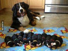 Good grief! Eleven puppies!