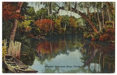 "This vintage postcard, circa 1942, features the Suwanee River in Florida. The back of the postcard offers a short poem: ""Way down upon the Suwanee River / Far, far away / There's where my heart is turning ever / There's where the old folks stay."""