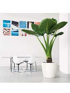 Lechuza® Classico LS Self-Watering Round Planters Colorful Plants, Large Plants, Potted Plants, Indoor Plants, Alocasia Plant, Cactus, Fake Plants Decor, Plant Decor, Self Watering Planter