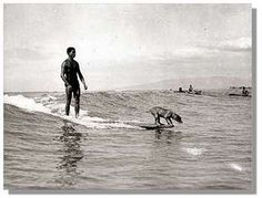 We will have a surfing dog one day.