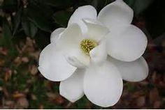 Magnolia tutorial | Gum Paste Flowers | Pinterest