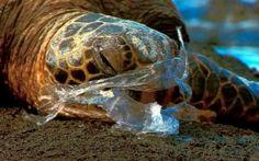 La contaminación por plásticos es una amenaza conocida pero no muy estudiada en ecosistemas oceánicos de todo el mundo.