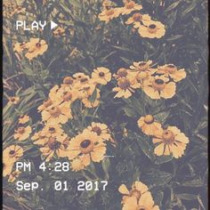 a.n.y Aesthetic Themes, Aesthetic Images, Aesthetic Grunge, Aesthetic Vintage, Aesthetic Photo, Mood Wallpaper, Aesthetic Pastel Wallpaper, Aesthetic Wallpapers, Looks Cool