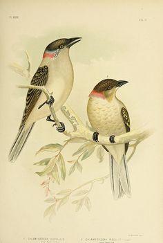 The birds of Australia,. Melbourne [etc.]C. Stuart & co.,1890-91