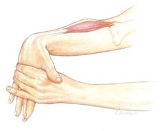 10 Tennis Elbow Exercises to Regain Your ChampionshipServe   Tennis elbow is an inflammation of the tendons that join the forearm muscles on the outside of the elbow. The forearm muscles and tendons become damaged from overuse — repeating the same motions again and again. This leads to pain and tenderness on the outside of the elbow. Here are 10 of the best exercises for tennis elbow: Tennis Elbow Exercise 1) Eccentric Exercise for Tennis Elbow This specific movement is the foundation to…