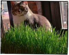 Plant a cat-friendly garden! | 11 Ways To Delight Your Cat AND Yourself