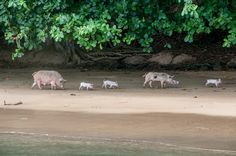 Principe, Sao Tome and Principe Natural Park, West Africa, Snorkeling, Travel Inspiration, Travelling, Sailing, Around The Worlds, Horses, Island