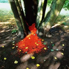 "Nils-Udo, ""Untitled-21"" Lime tree, bird berries and lime tree sheets, Aachen, Germany, 1999"