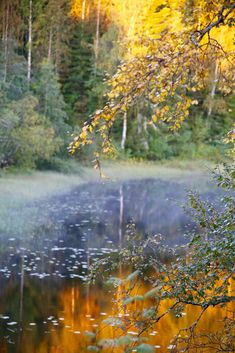 Autumn in Finland Nordic Design, Nordic Style, On Golden Pond, Autumn Forest, Peaceful Places, Fall Photos, Landscape Photos, Amazing Nature, Beautiful World
